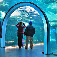 Sea Ice Passage at Zoo in Winnipeg, Canada <br /> The Journey to Churchill opened at the Assiniboine Park Zoo in 2014.  It is a tribute to Churchill in northern Manitoba along Hudson Bay. The town is called the &ldquo;Polar Bear Capital of the World.&rdquo;  The highlight of the exhibit is this 70 foot long tunnel named Sea Ice Passage where polar bears swim and play all around you. The zoo also has an International Polar Bear Conservation Centre.