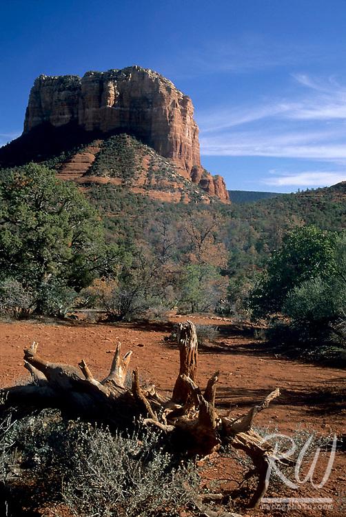 Fallen Tree and Butte, Sedona, Arizona