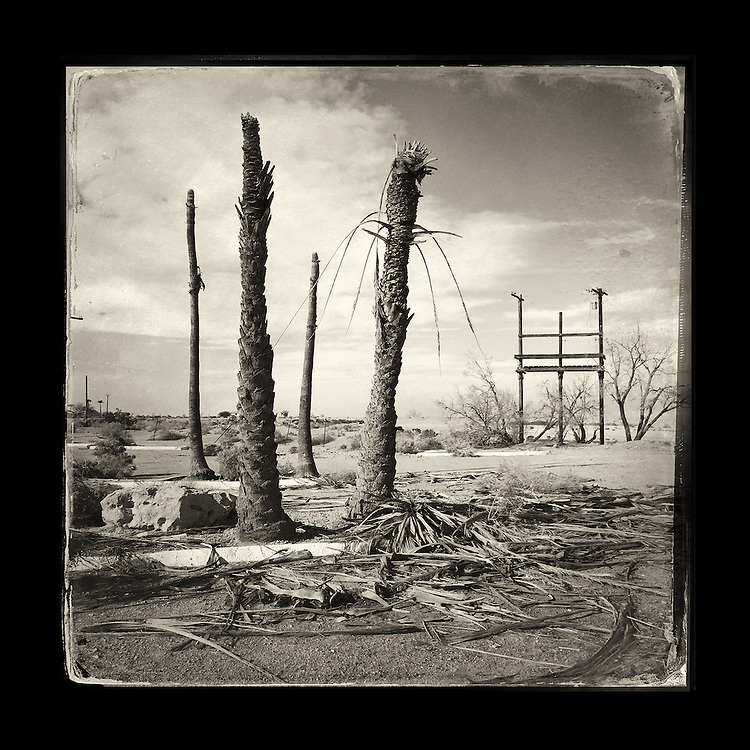 "Charles Blackburn image of a palm trees at the Yacht Club in Salton City, CA. 5x5"" print."