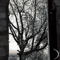 Tree framed in doorway