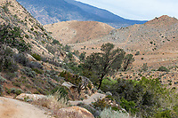 Butterfly habitat at Erskine Creek, Kern Co, CA, USA, on 04-May-16