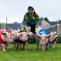 Kilmihil Festival of Fun Pig Racing 2015