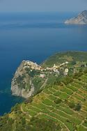 Town of Corniglia,Cinque Terre,Liguria,Italian Riviera,Italy,Europe