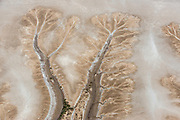 Flying over the tidal mud flats of Derby, the mangrove-lined rivers and drainage channels appear as great snaking branches and intricate tendrils. Kimberley Region. Western Australia