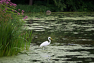 An egret at Turtle Pond in Central Park.