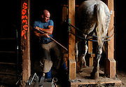 Muscles tauten as farrier Travis Swanson positions the hoof of one of the W. H. Sommer Park's Percheron draft horses.  Swanson, 29, is one of few farriers to prefer working with these one-ton draft horses.  The park's two Percherons are unshod because they walk primarily on pasture and grass but their hooves still need to be filed and trimmed. ©Peoria Journal Star/David Zalaznik