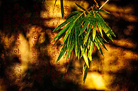 Bamboo leaves worked into a stylized and artistic image.