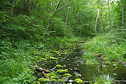 Forest stream; Russia; taiga (forest) in Siberian Far East; Asian temperate forest, habitat for Siberian tiger, Amur leopard; Kedrovaya Pad Zapovednik (Nature Reserve)
