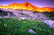 Kiyo Crag at sunrise in the Badger-Two Medicine Roadless Area. Rocky Mountain Front, south of Browning, Montana.