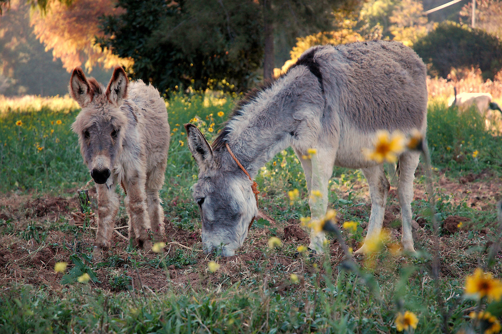 ".""There are more donkeys than cars in the Valley of Apoala"""