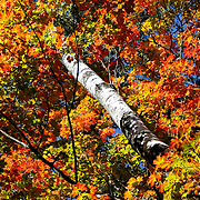 """Surrounded""<br />