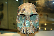 First humans.  Some scientists think this is the earliest evidence of humans.  It is about 1.9 million years old and belongs to the species Homo rudolfensis (which is sometimes included in Homo habilis).  It has a bigger brain but retains the flat face and big teeth of the australopithecines.  Stone tools of the same age have also been discovered, but not at the same site as this fossil.