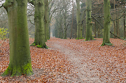 Landgoed Zonnestraal