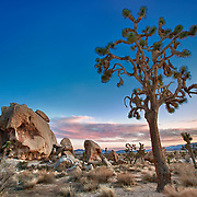 Joshua Tree And Half Skull At Sunset - Joshua Tree National Park CA