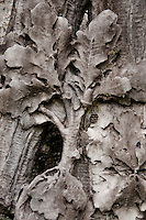 Ticino, Southern Switzerland. Carved stone oak leaves on a tombstone. Creates a beautiful oak leaf stone texture.