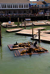San Francisco: Sea lions and tourists at Pier 39. Photo 14-casanf78151. Photo copyright Lee Foster.