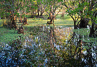 Lush wetland at Fogg Dam Conservation Reserve, Northern Territory