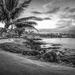 Maui Hawaii sunrise black and white photo with a plam tree along Wailea Beach Path at Wailea Beach. Copyright ⓒ 2019 Paul Velgos with All Rights Reserved.
