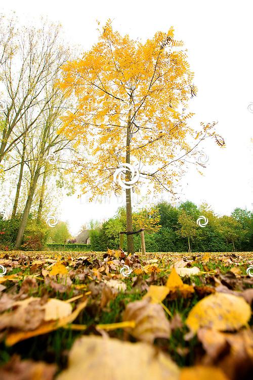 ZALTBOMMEL - De bladeren vallen weer massaal van de bomen. De Herfst heeft zijn entree weer gemaakt. FOTO LEVIN DEN BOER - PERSFOTO.NU