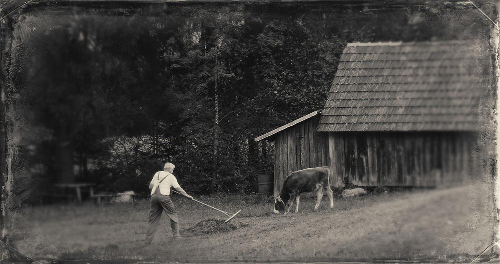 Raking hay by hand, near Brod,, Slovenia