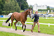 Nicola Wilson (GBR) & One Two Many - First Horse Inspection - Longines FEI European Eventing Championships - Blair Castle, Scotland - 09 September 2015