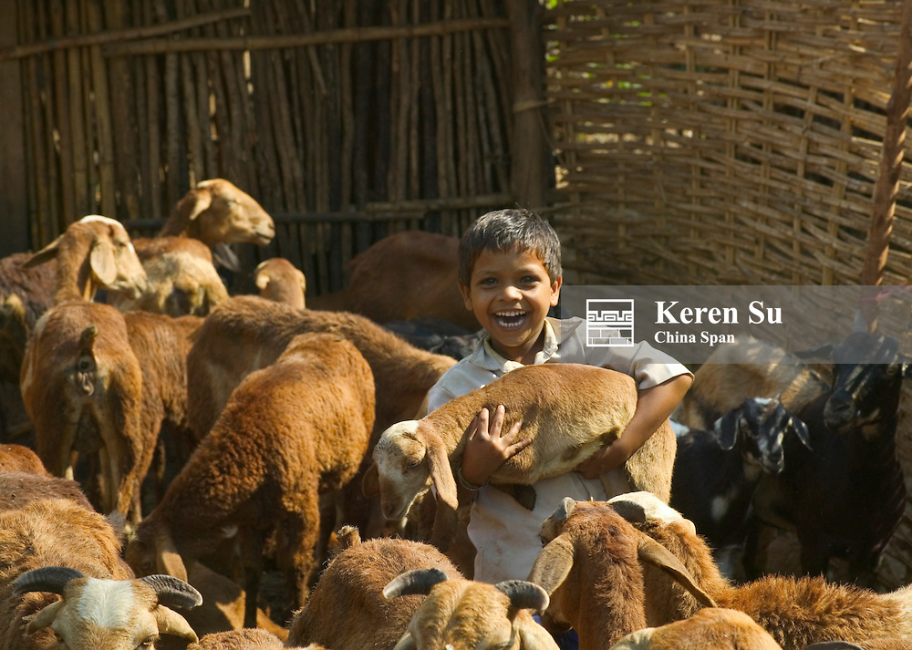 Boy with baby sheep in the village, Orissa, India