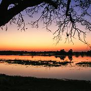 The Okavango Delta & Maun, Botswana