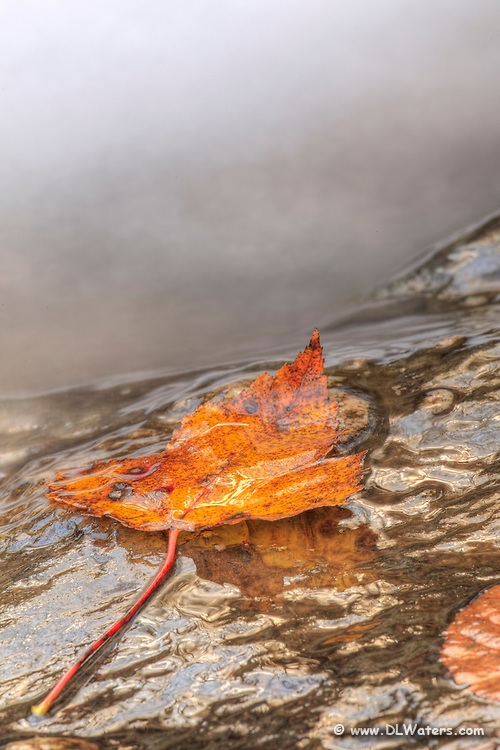 Wet fall leaf next to a flowing stream.