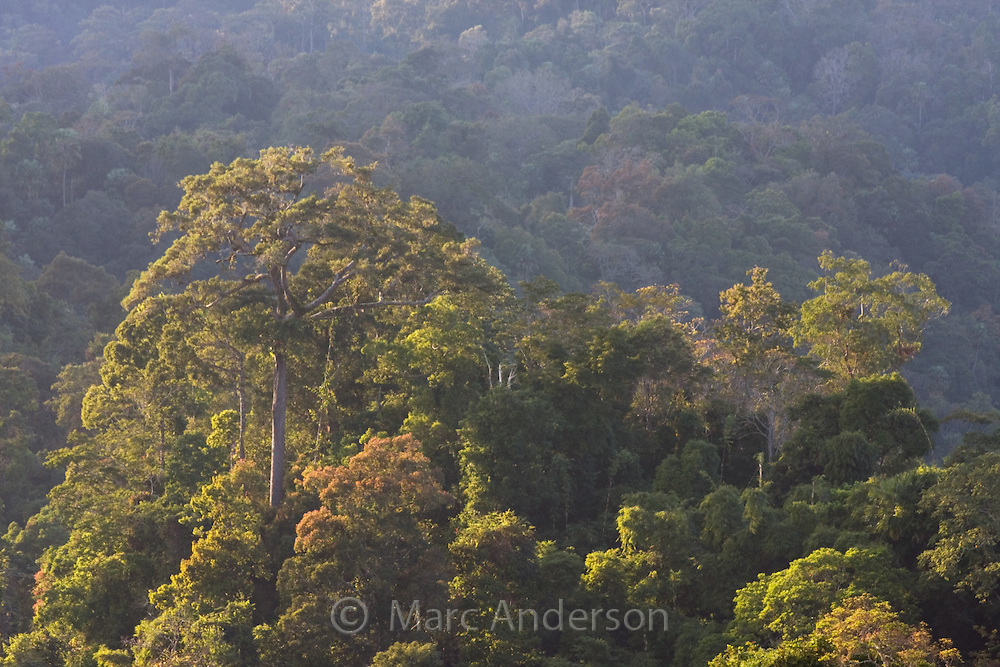 Rainforest covered hills, Kaeng Krachan National Park, Thailand