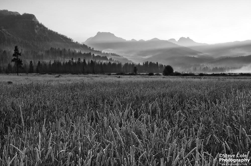 Morning in Round Prairie - Yellowstone National Park