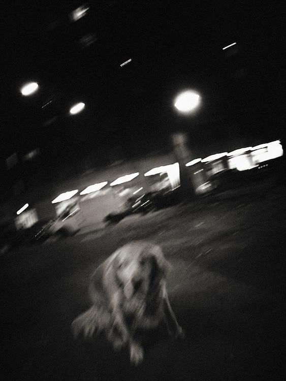 Street Photography, Italy, Lombardy, Milan, Milano, dog