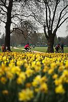 Spring flowers bloom in Hyde Park, London, England.