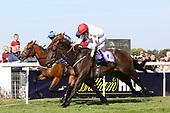 Horse Racing Beverley Bullet Day 01SEP18 010918