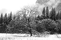 Winter in Yosemite Valley