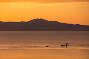 Kayaker and dolphins in the Sea of Cortez, Loreto, Baja California Sur, Mexico.