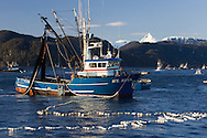 The F/V St. Zita fishing during the Sitka Sound herring sac roe fishery in Alaska.
