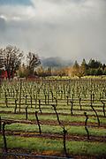 Augustino Vineyards at Rock'n'ranch