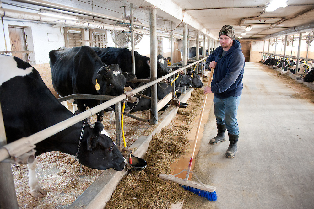 Farmer sweeping in front of cow pens