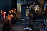 Inde, etat du Tamil Nadu, Kanchipuram, Temple de Kamakshi Amman, benediction d un elephant // India, Tamil Nadu, Kanchipuram, Kamakshi Amman