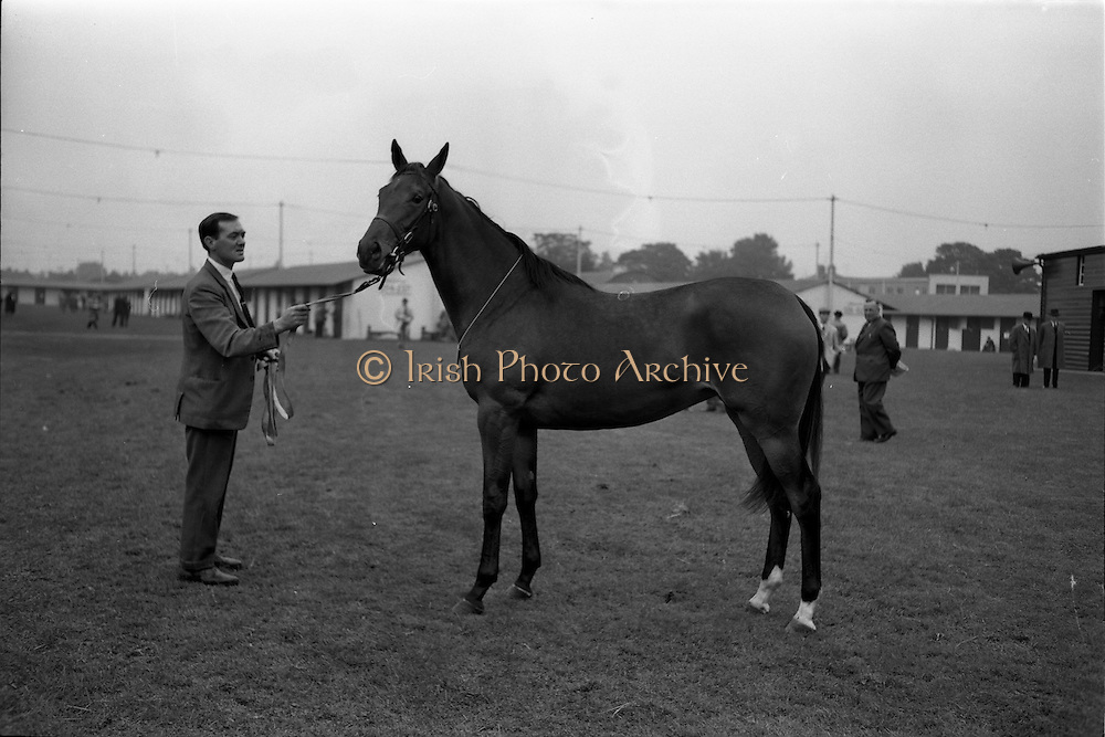 25/09/1962<br /> 09/25/1962<br /> 25 September 1962<br /> Goffs September Bloodstock Sales at the RDS, Dublin. Picture shows a bay filly from the Riversdale Stud, sold to the London Bloodstock Agency for 8,800 guineas.