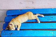 Kitten in La Bajada, Pinar del Rio, Cuba.