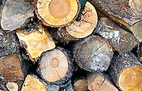 Background of log, ideal for use in graphics.