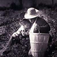 A child rests his head upon his grandmother while she is working in a field in Queen Anne's County, Maryland in 1981.