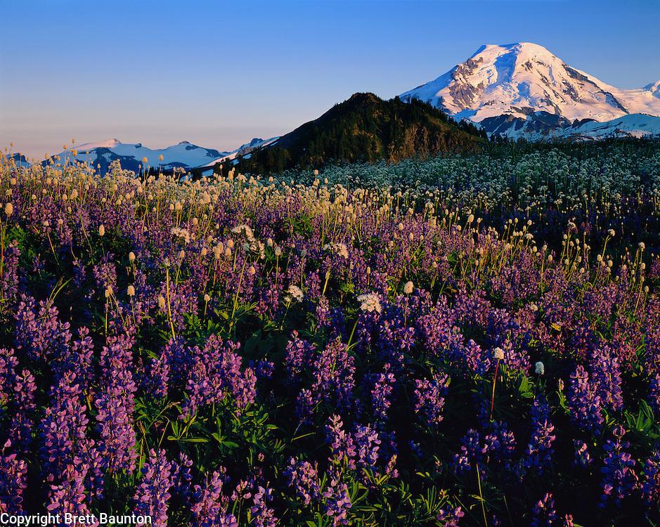 Mt. Baker, Skyline Divide, Wildflowers, Lupine, Bistort, Valerian