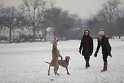 Pet dogs enjoy the snow in Ruskin Park, south London during the bad weather covering every part of the UK and known as the 'Beast from the East' because Siberian winds and very low temperatures have blown across western Europe from Russia, on 1st March 2018, in Lambeth, London, England.