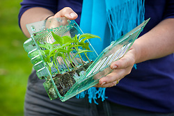 Opening plastic tray of young plug plants as sent by mail order