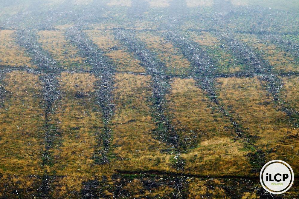Pine (Pinus sp) tree clear cut, Glen Isla, Scotland, United Kingdom