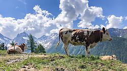 THEMENBILD - Deutsche Wanderin stirbt nach Kuh-Attacke, Landwirt muss mehr als 180.000 Euro bezahlen. Mit massiven finanziellen Folgen hat ein Bauer zu kämpfen, dessen Kuhherde eine deutsche Hundehalterin zu Tode getrampelt hat. Ein Gericht in Österreich sorgte mit seinem Urteil für Aufsehen. Die 45 Jahre alte Hundehalterin aus Rheinland-Pfalz war im Sommer 2014 im Tiroler Stubaital von der Kuhherde, die offenbar die Kälber vor dem Hund schützen wollte, zu Tode getrampelt worden. Die Frau hatte laut Gericht die Hundeleine mit einem Karabiner um die Hüfte fixiert. Bild Aufgenommen am 19.06.2019 in Kals am Großglockner, Österreich // German wanderer dies after cow attack, farmer must pay more than 180,000 euros. With massive financial consequences has a farmer to fight, whose cow herd has trampled a German dog owner to death. A court in Austria caused a stir with his judgment. The 45-year-old dog owner from Rheinland-Pfalz was trampled to death in summer 2014 in the Tyrolean Stubai Valley by the herd of cattle, who apparently wanted to protect the calves from the dog. The woman had loud court the dog leash with a carabiner around the waist fixed. Picture taken on 2019/06/19 in Kals am Großglockner, Austria. EXPA Pictures © 2019, PhotoCredit: EXPA/ Johann Groder