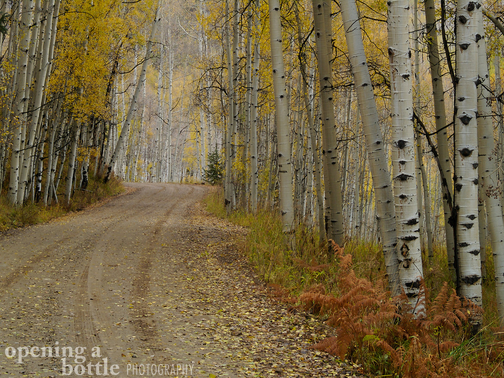 Ohio Pass Road passes through a glade of aspens in the fall, near Crested Butte, Colorado.