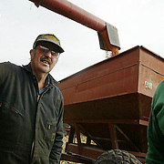 farmers -- brighton, dec. 28 -- Brother farmers Roger, left, and Roy Anderson found an unusually warm December day to finish harvesting a field of corn on their farm in northern Jefferson county.  Along with brother Robert, the three Anderson brothers, all bachelors, work on their Walnut township century farm.  photo by david peterson